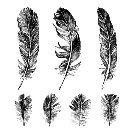 black and white image drawing: Hand drawn feathers set on white background