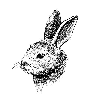Hand drawn rabbit on white background Vector