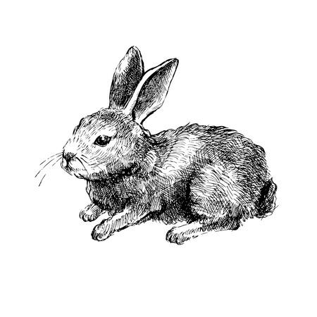 lapin blanc: Main de lapin dessin� sur fond blanc Illustration