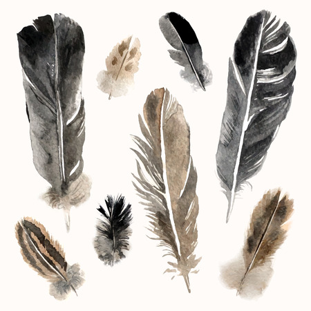 Highly detailed watercolor feathers on white background