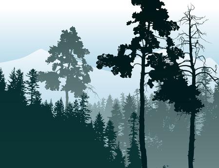 coniferous forest: Cartel de estilo retro con paisaje de bosques de coníferas