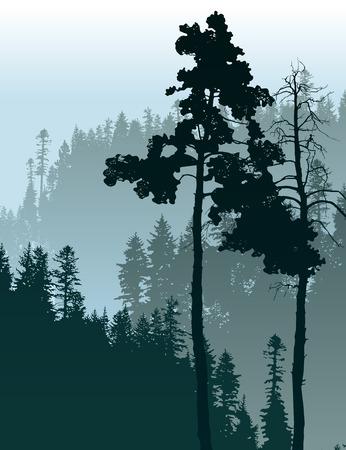 for�t r�sineux: affiche de style r�tro avec des conif�res paysage forestier