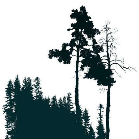coniferous forest: Cartel de estilo retro con paisaje de bosques de con�feras