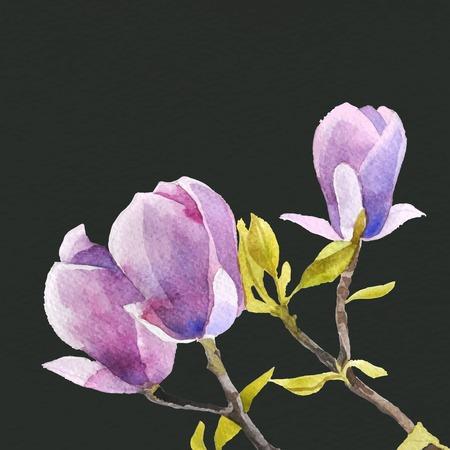 magnolia: Watercolor magnolia flowers on dark background Illustration