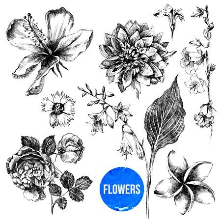 7 매우 상세한 손으로 그린 꽃의 컬렉션 일러스트