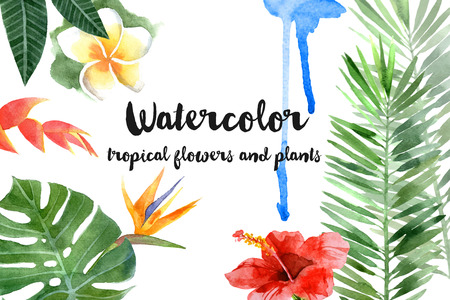 feuillage: main aquarelle dessinée plantes tropicales