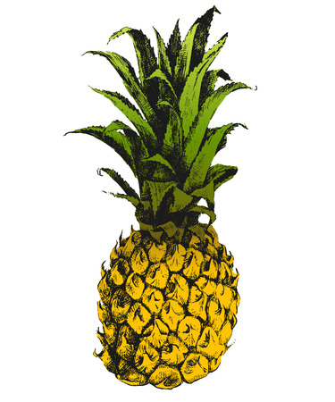 Hand drawn pineapple in color