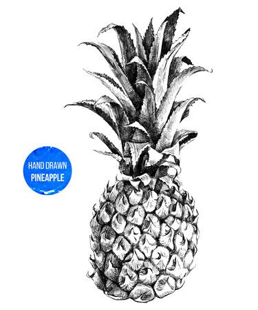 lijntekening: Hand getrokken ananas in kleur