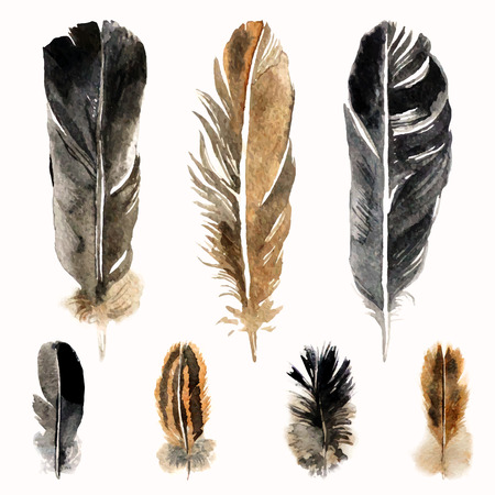 watercolor pen: Hand drawn watercolor feathers on white background Illustration