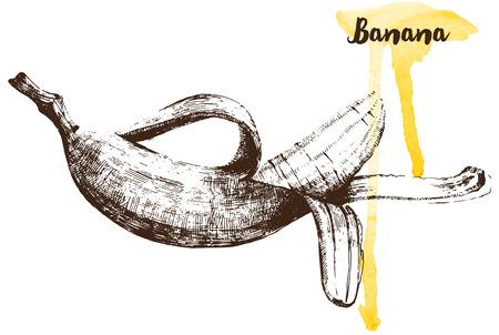 Hand drawn banana on white background Vector