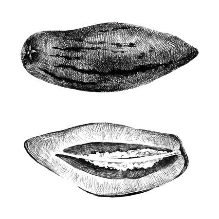 pepino: Hand drawn pepino melon on white background Illustration