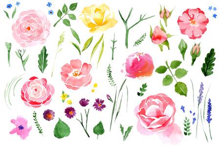 美しい水彩花白背景に設定  イラスト・ベクター素材