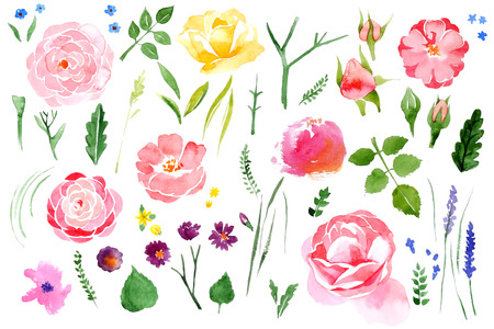 Beautiful watercolor flower set over white background