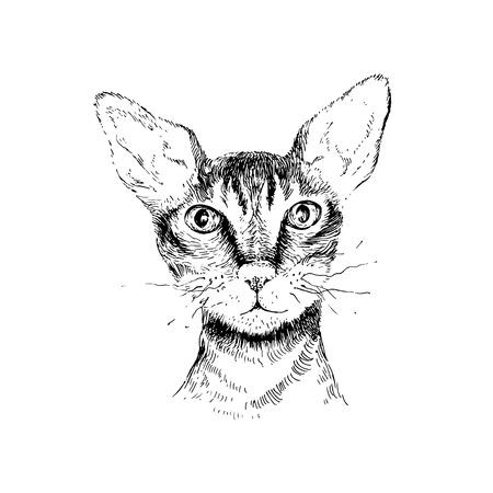 cornish rex: hand drawn cornish rex cat portrait