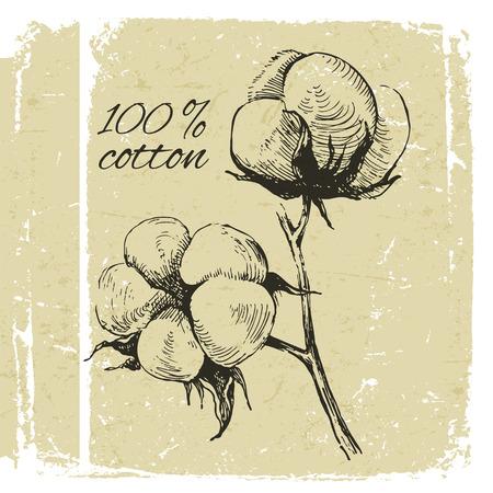 Hand drawn cotton brunch in vintage style Illustration