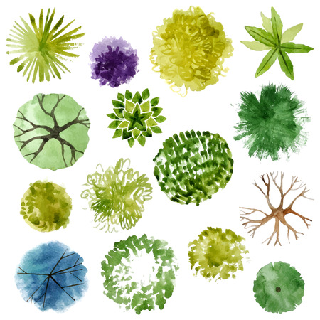dessin: arbres Aquarelle - vue de dessus. Facile � utiliser dans vos projets d'am�nagement paysager