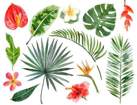 cocotier: Grande main aquarelle dessinée plantes tropicales fixés