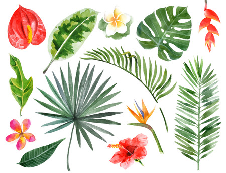 exotic: Large hand drawn watercolor tropical plants set Illustration
