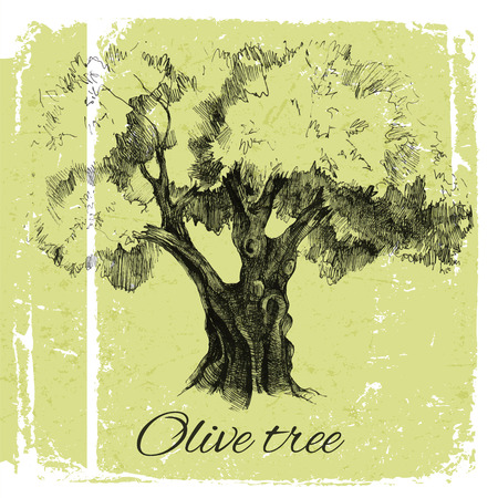 olive: Old hand drawn olive tree