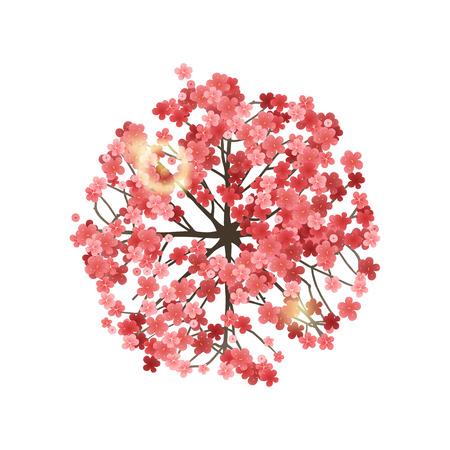 dessin fleur: Printemps arbre vue de dessus. Facile à utiliser dans vos projets d'aménagement paysager