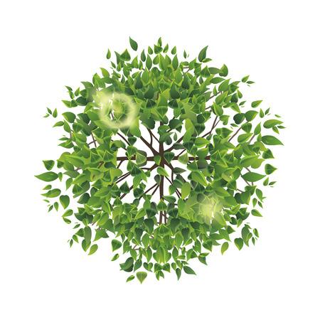 trompo de madera: Árbol del verano vista superior. Fácil de usar en sus proyectos de diseño de paisaje