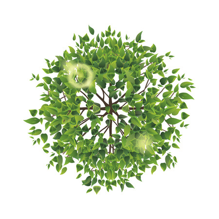 Summer tree top view. Easy to use in your landscape design projects