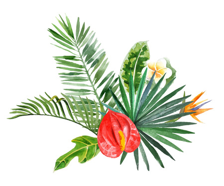foliage frond: watercolor tropical plants for your designs over white background