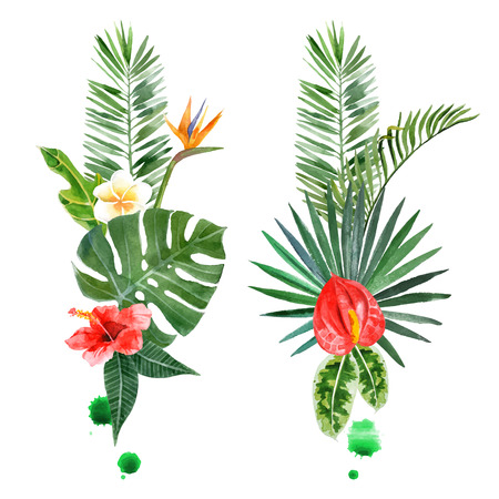 rainforest: watercolor tropical plants for your designs over white background