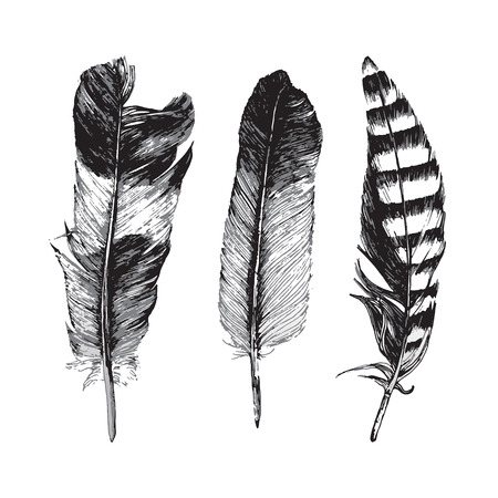black and white image drawing: 3 hand drawn feathers on white background