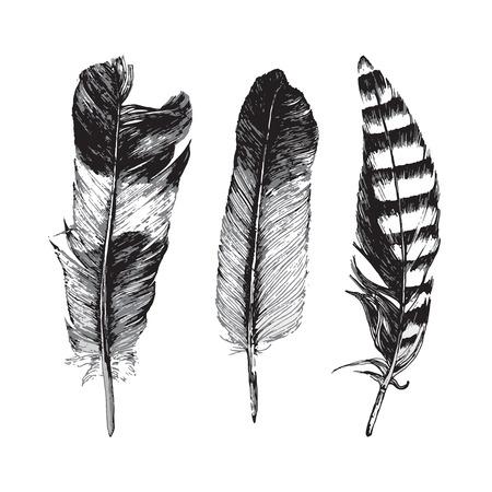 oiseau dessin: 3 plumes dessinés à la main sur fond blanc
