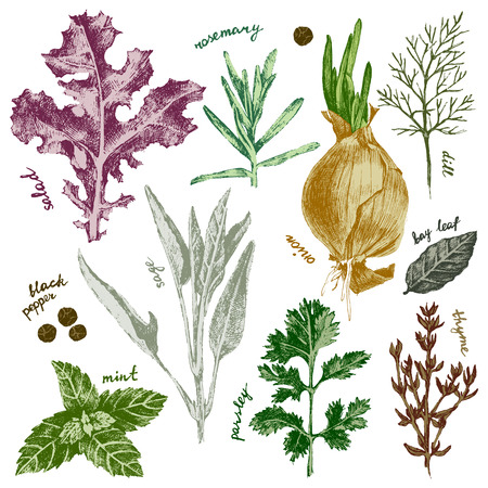 hand drawn highly detailed herbs and spices set in color