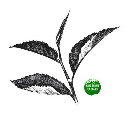 boceto: dibujado a mano la hoja de té en el fondo blanco Vectores