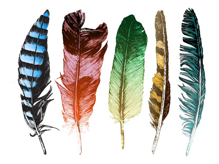 feather quill: 5 colorful hand drawn feathers on white background
