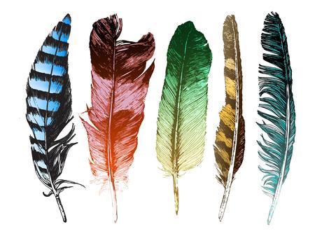 pluma blanca: 5 plumas dibujadas mano de colores sobre fondo blanco Vectores