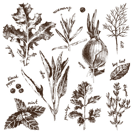 rosemary:  detailed herbs and spices set