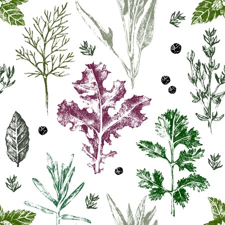 thyme: Seamless pattern with hand drawn herbs and spices in color