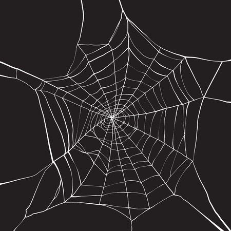 spiders: White spider web on dark background Illustration