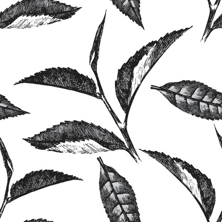 tea plantation: seamless pattern with tea leafs on white background Illustration