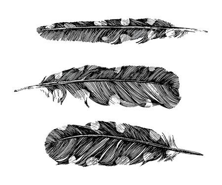 pluma: plumas en el fondo blanco Vectores