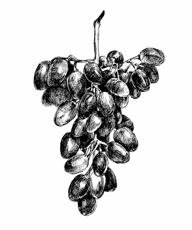 white color: grapes in black and white color Illustration
