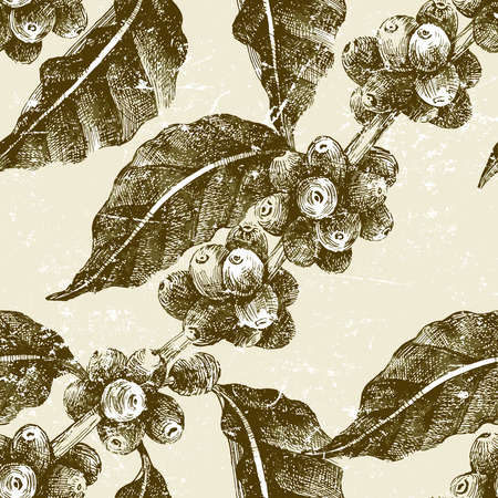 coffee harvest: hand drawn seamless pattern with coffee pant in vintage style