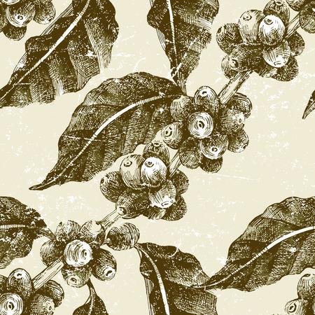 planta de cafe: mano sin fisuras patrón dibujado con pantalón café en estilo vintage Vectores