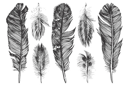 feather quill: 7 hand drawn feathers  on white background Illustration