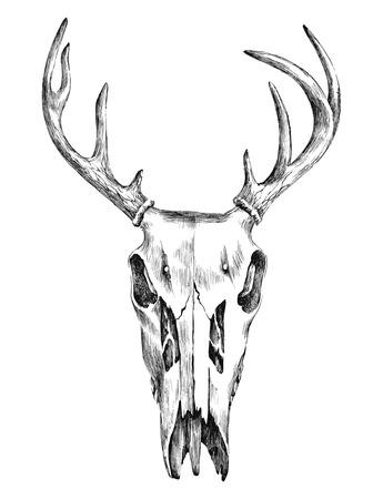 venado: dibujado a mano ilustración en blanco y negro con scull ciervos