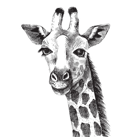 Hand drawn black and white giraffe portrait