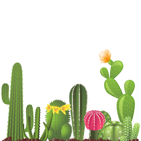 Different types of cactuses - vector border