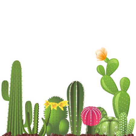 Los diferentes tipos de cactus - vector de la frontera Foto de archivo - 55362579