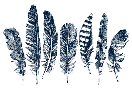 feather quill: 7 hand drawn feathers on white background