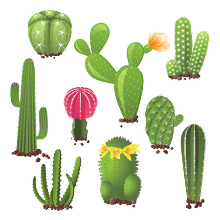 Different types of cactuses icons set