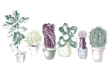 Set of hand drawn cactuses and succulents
